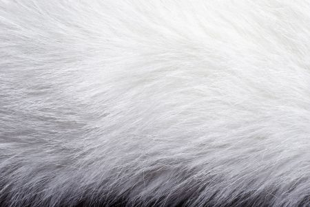 Look at this fur - alluring to touch, right?